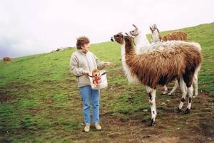 Harry Feeds Lamas with Sue Sollis,